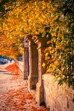 Beautiful, golden autumn scenery with trees and golden leaves in the sunshine in Scotland. Beautiful, golden autumn scenery with trees and stone gate in the stock images