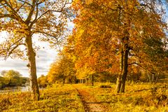 Beautiful, Golden Autumn Scenery With Trees And Golden Leaves In The Sunshine In Scotland Stock Photography