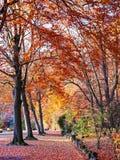 Parc de Sept Heures in autumn, at Spa, Belgium. Beautiful golden autumn in the Seven o`clock Park, Parc de Sept Heures in Spa, Belgium Stock Photo