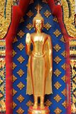 Golden buddha image in standing version Royalty Free Stock Images