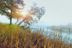 Beautiful golden colorful autumn foggy morning over river in nature landscape Royalty Free Stock Photography