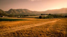 Beautiful golden cornfield at sunset Royalty Free Stock Photo