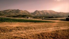 Beautiful golden cornfield at sunset Stock Image