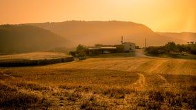 Beautiful golden cornfield at sunset Stock Photography