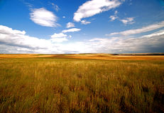 Beautiful Golden Field Stock Photo