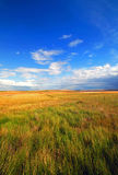 Beautiful Golden Field with Blue Sky Royalty Free Stock Photos