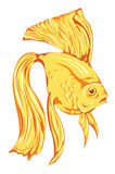 Beautiful golden fish  Royalty Free Stock Photography