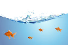 Beautiful golden fishes. Illustration of gold fishing swimming in water Royalty Free Stock Image