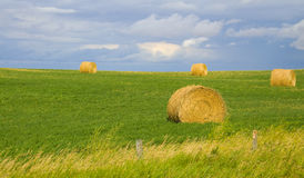 Beautiful golden hay royalty free stock photography