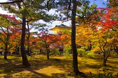 Beautiful golden pavilion with autumn garden, Kyoto. Beautiful golden pavilion with autumn foliage garden and rim light at Kinkakuji temple in Kyoto, Japan royalty free stock images
