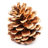 Beautiful golden pine cone isolated on white background Royalty Free Stock Photography