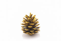 Beautiful golden pine cone. Stock Images