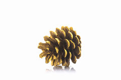 Beautiful golden pine cone. Royalty Free Stock Photo