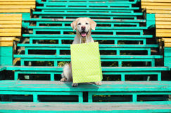 Beautiful Golden Retriever dog holding shopping bag in teet