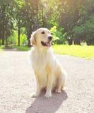 Beautiful Golden Retriever dog sitting outdoors Stock Photo