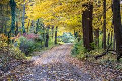 Beautiful golden road covered in Fall leaves royalty free stock image