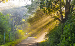 Beautiful golden sun rays in the forest of Masinagudi, India. Beautiful view of golden sun rays surrounded by the colorful dense forests of Masunagudi, Tamil Royalty Free Stock Photography