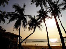 Beautiful golden sunset on the beach, GOA, India. Palms silhouettes against sun during sunset Stock Photography