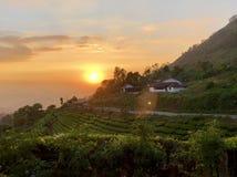 Beautiful golden sunset on tea estate Stock Image