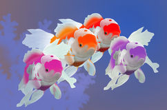 Beautiful goldfish bevy Stock Images