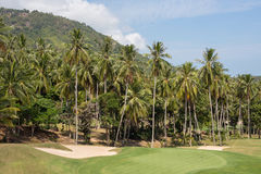 Beautiful golf course and palm tree. Island Koh Samui, Thailand Royalty Free Stock Images