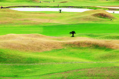 Beautiful golf place with nice background Royalty Free Stock Photography