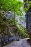 Beautiful gorge in Carpathian mountains Royalty Free Stock Image