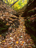 Beautiful Gorge - Illinois. A deep gorge fills with falling leaves at Kishwaukee Gorge Forest Preserve in Illinois Stock Photography