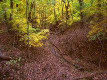 Beautiful Gorge - Illinois. A deep gorge fills with falling leaves at Kishwaukee Gorge Forest Preserve in Illinois Royalty Free Stock Image
