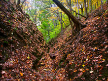 Beautiful Gorge - Illinois. A deep gorge fills with falling leaves at Kishwaukee Gorge Forest Preserve in Illinois Royalty Free Stock Images