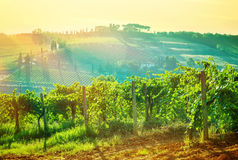 Beautiful grape valley landscape Royalty Free Stock Images
