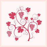 Beautiful grape vine with frame background. Stock Photo