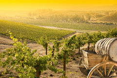 Beautiful Grape Vineyard with Old Barrel Carriage  Stock Photography