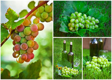 Beautiful Grapes Collage Royalty Free Stock Photo