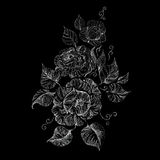 Beautiful graphically drawing peony Stock Images