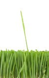 Beautiful grass Stock Images