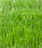 Beautiful grass Royalty Free Stock Photography