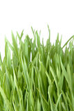 Beautiful grass Royalty Free Stock Photos