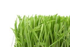 Beautiful grass royalty free stock photos