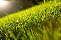 Beautiful grass Royalty Free Stock Photo