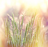 Beautiful grass bathed in sunlight Stock Photos