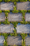 Beautiful grass and beton texture Royalty Free Stock Image