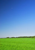Beautiful grass and clear blue Stock Photo