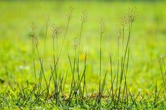 Beautiful grass Stock Photography