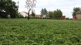 Beautiful grass on farm in Serbia. Cutting the grass with love Stock Photo