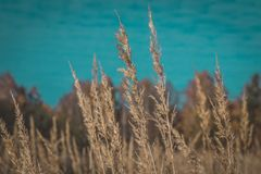 Beautiful grass in the field royalty free stock photography