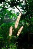 Grass flowers in garden. stock image