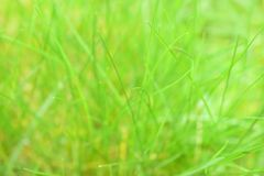 beautiful grass green Στοκ φωτογραφία με δικαίωμα ελεύθερης χρήσης