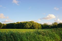Beautiful grass landscape Stock Image