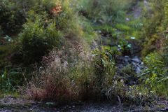 Beautiful grass lit by the sun on a blurred background royalty free stock photography